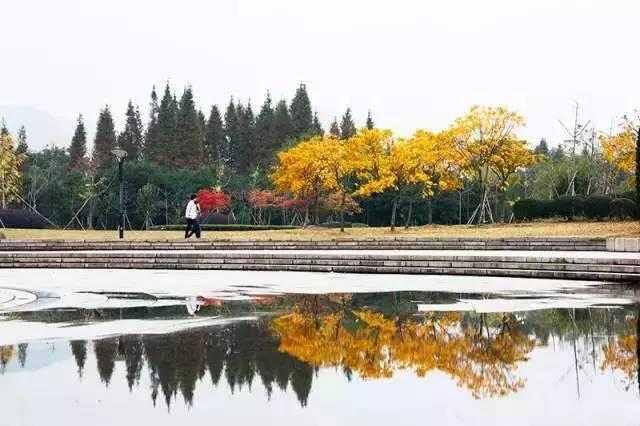 要去深秋的温州大学城,这里最吸引人的就是大学城活动中心的银杏林.图片