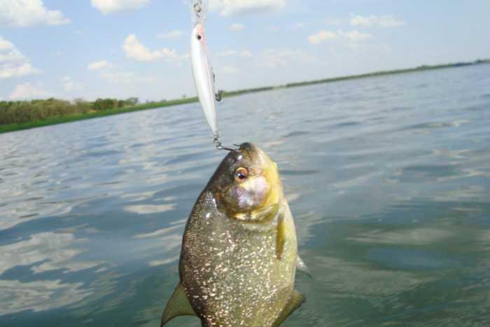 有群小伙闲来无事便相约到海边垂钓,鱼虽然是钓了不少,而且还钓上一件